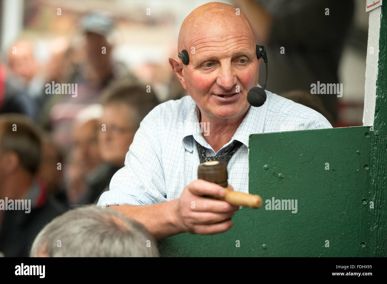 Auctioneer at the Hawes sheep auction in Yorkshire, England, UK. - Stock Image