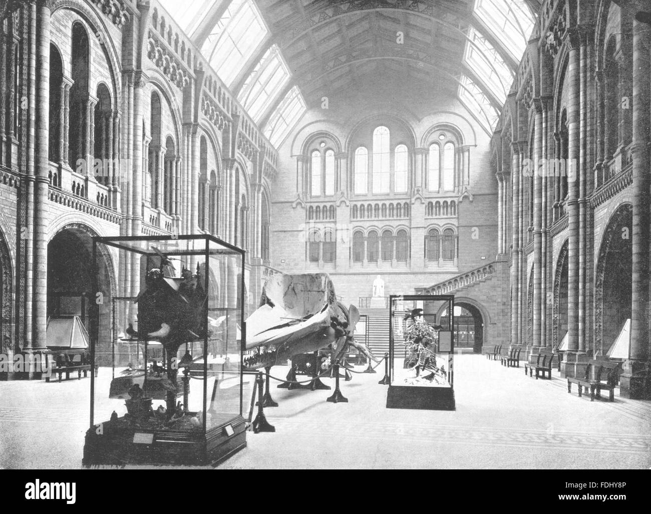 LONDON: Natural History Museum- The Entrance Hall, antique print 1896 - Stock Image
