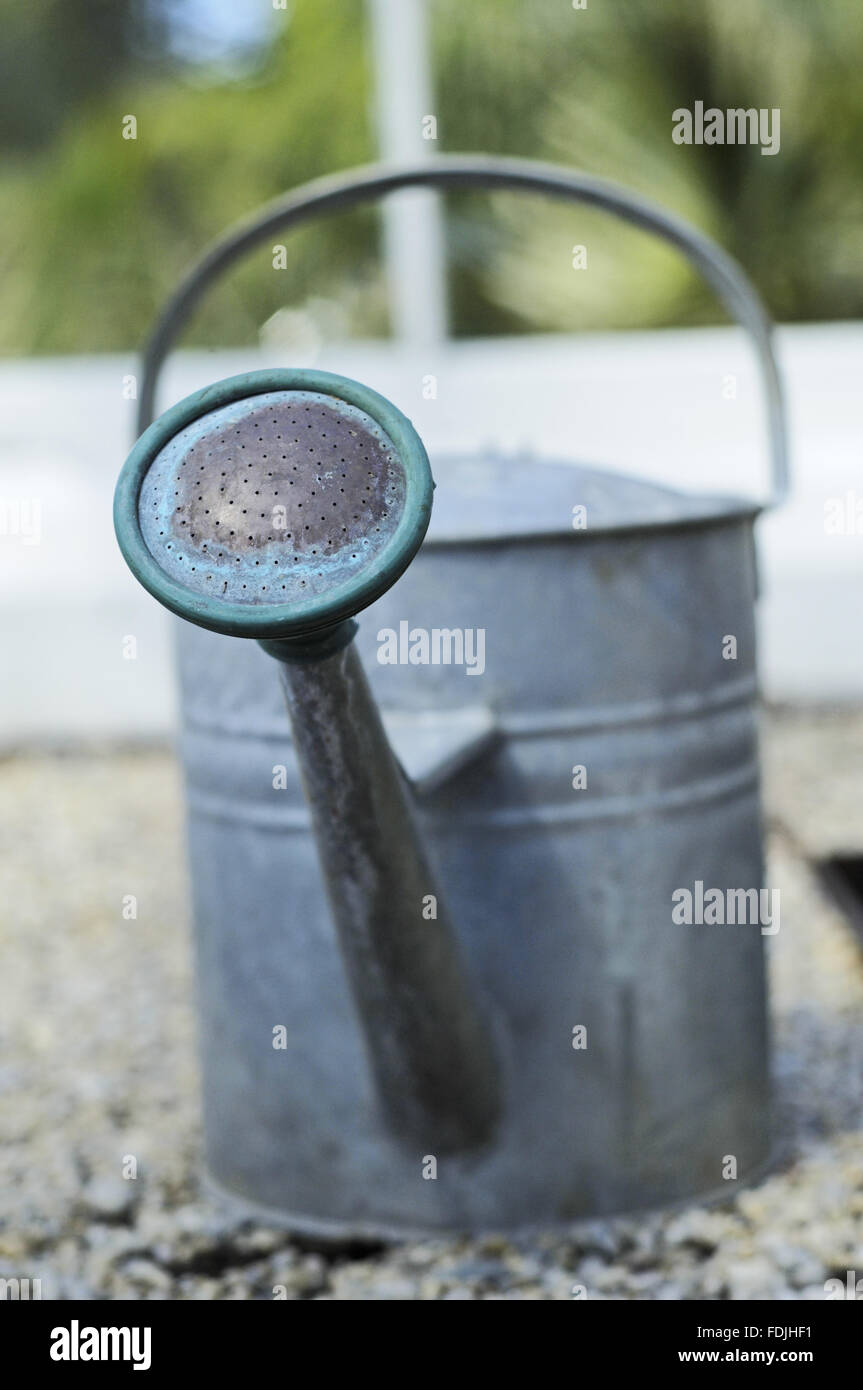 Old fashioned watering can in the glasshouse at Trengwainton, near Penzance, Cornwall. - Stock Image