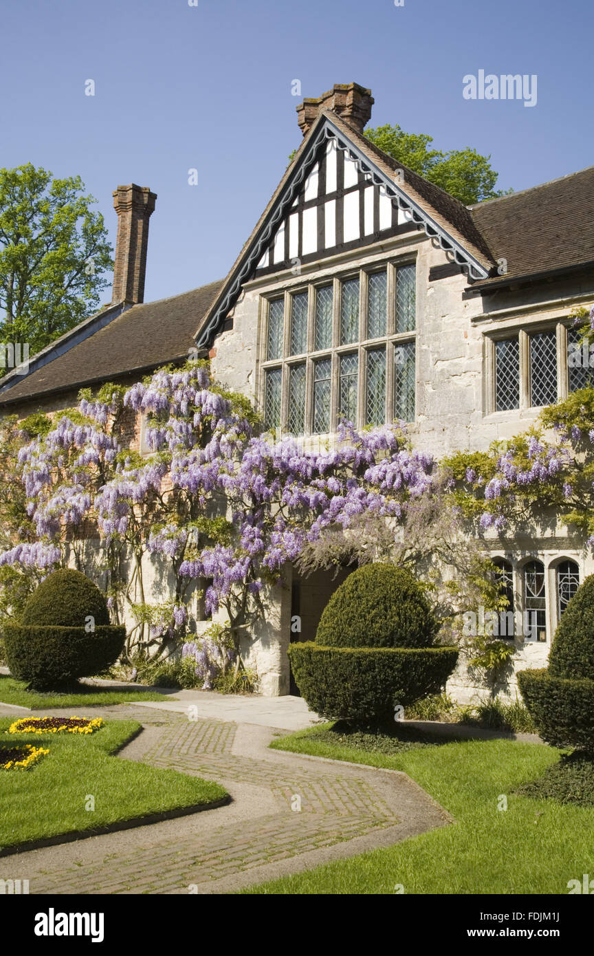 The fifteenth-century Courtyard range of Baddesley Clinton, West Midlands with a pretty wisteria climbing the stone - Stock Image
