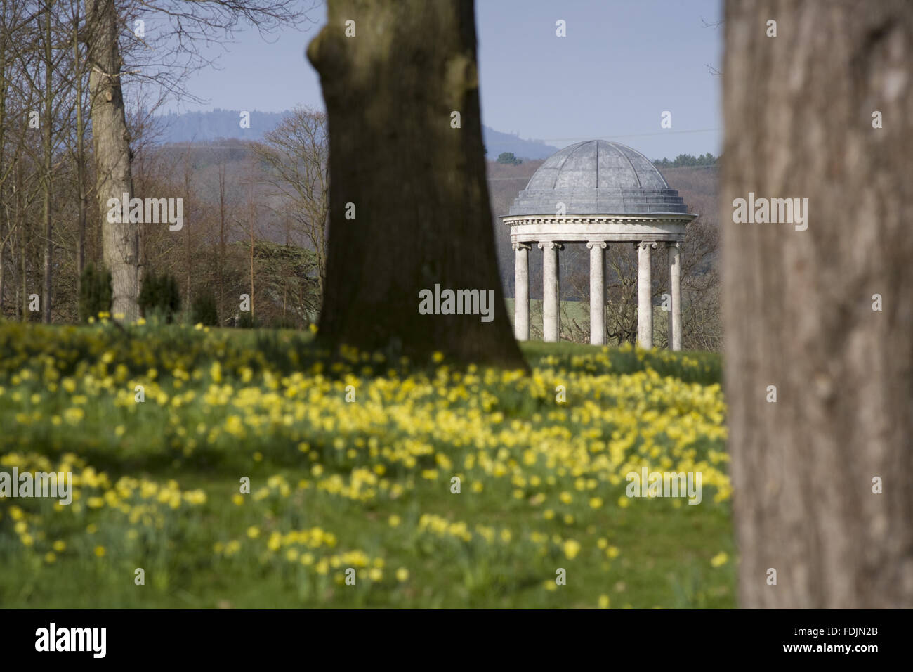 The rotunda built in 1766, and daffodils in the park at Petworth House, West Sussex. The Ionic rotunda may have been designed by Matthew Brettingham probably inspired by Vanbrugh's rotundas. Stock Photo