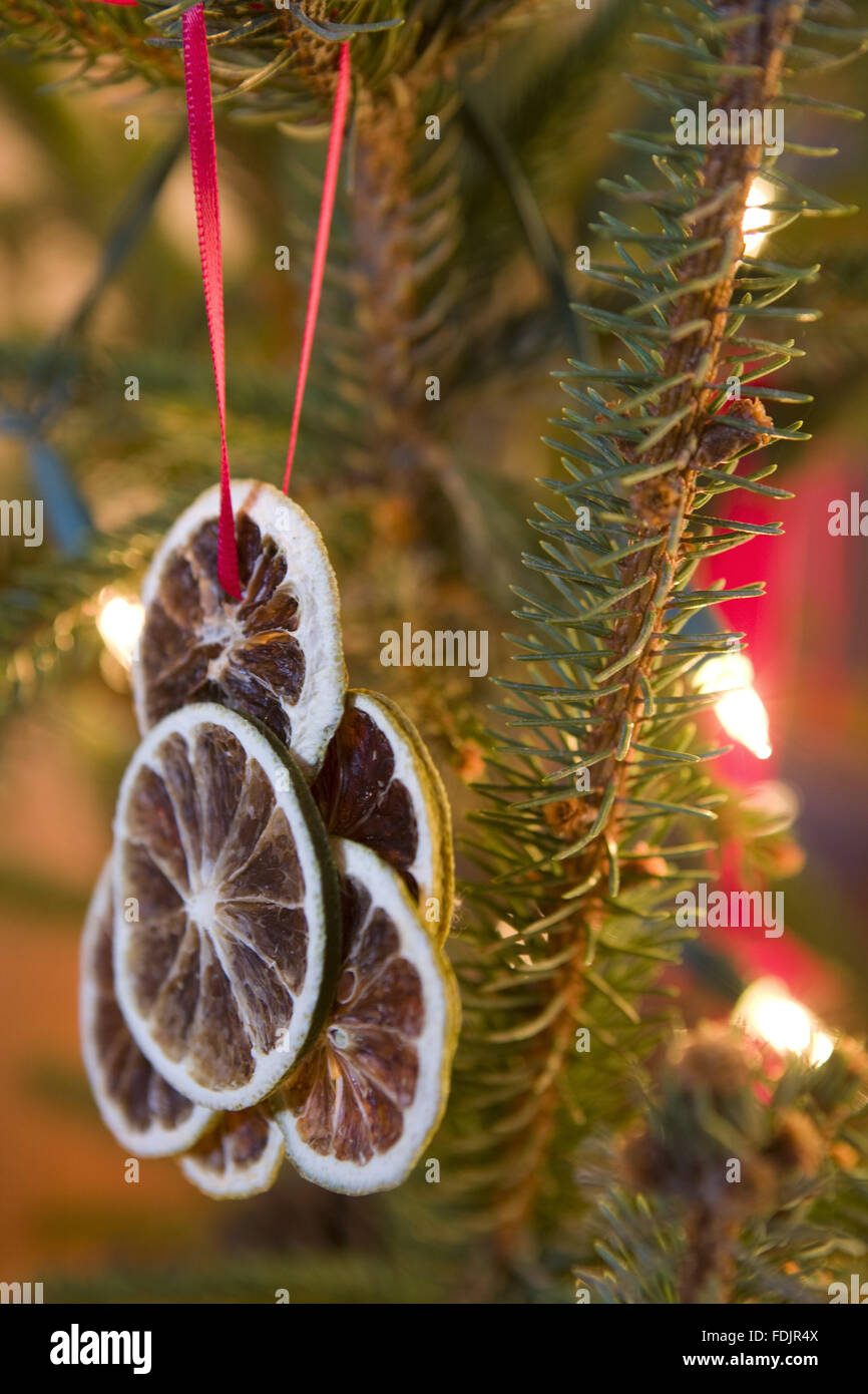 traditional victorian christmas decorations made of preserved orange slides on the tree at standen