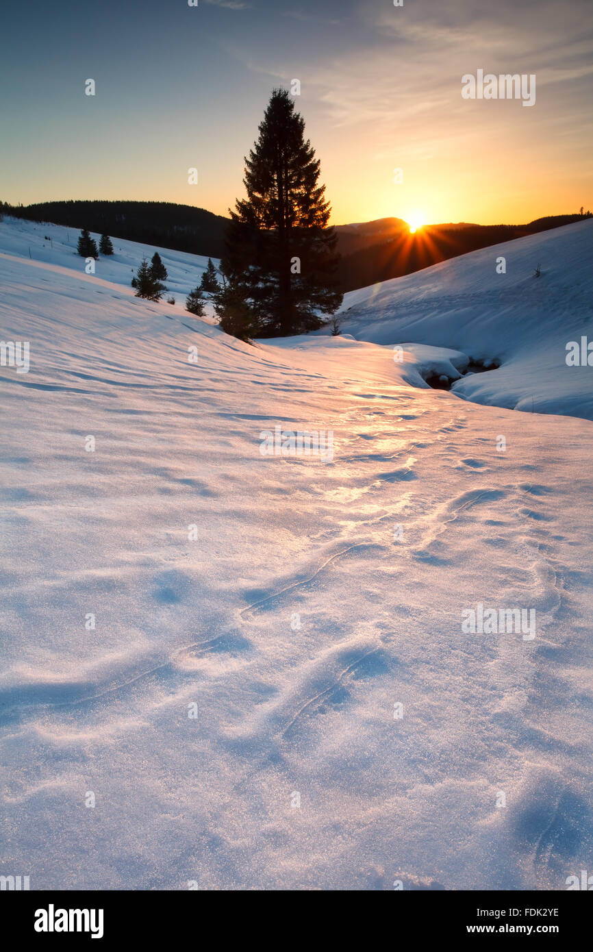 sunset over mountain meadows in snow, Todtnauberg, Germany - Stock Image