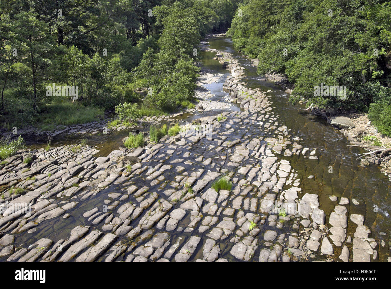The effects of the drought during July and August 2006 are seen at the River Allen, Northumberland. The riverbed - Stock Image