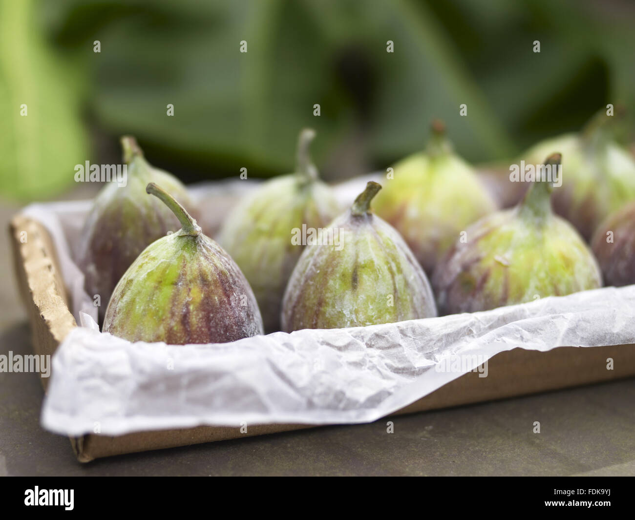 Fresh figs in summer. - Stock Image