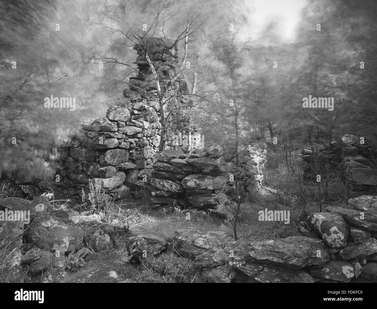 A black and white photograph of a ruined building on Llyndy Isaf, an estate of 600 acres in Snowdonia, in the Nant - Stock Image