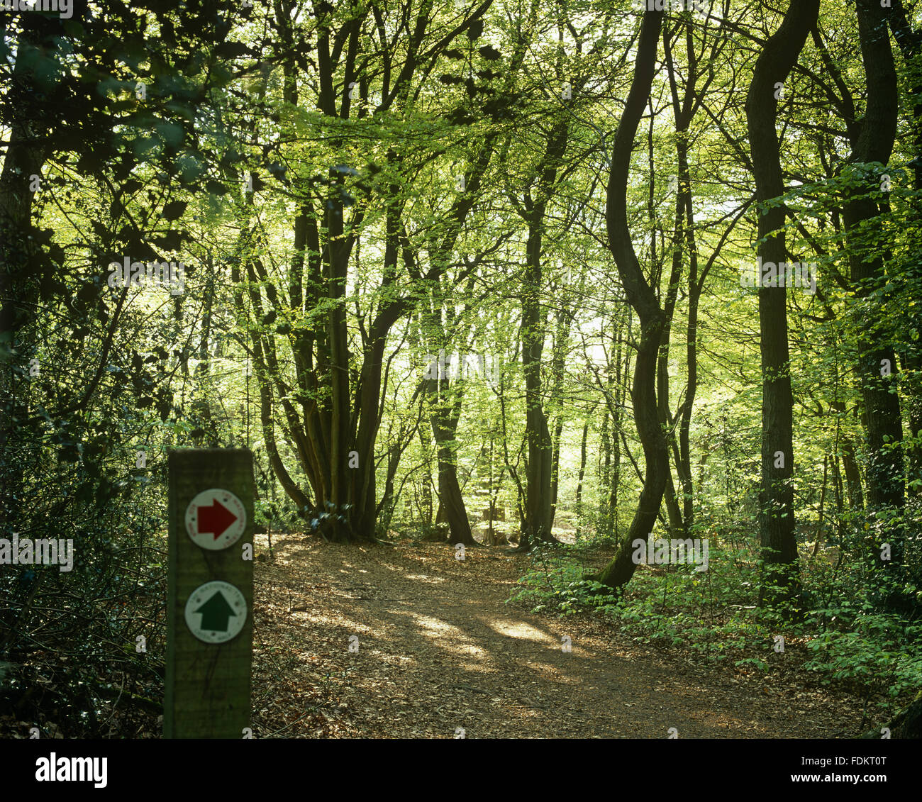 Spring Sun On The Trees At Toys Hill Kent Stock Photo 94478296 Alamy