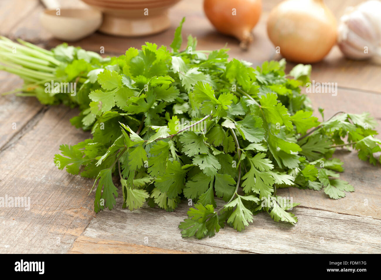 Fresh coriander on the table - Stock Image