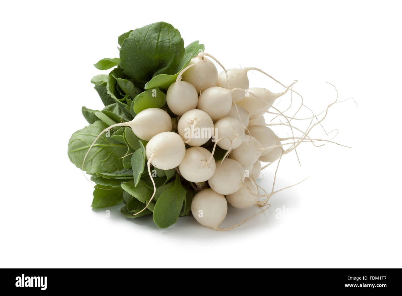 Bunch of fresh white Radish on white background - Stock Image