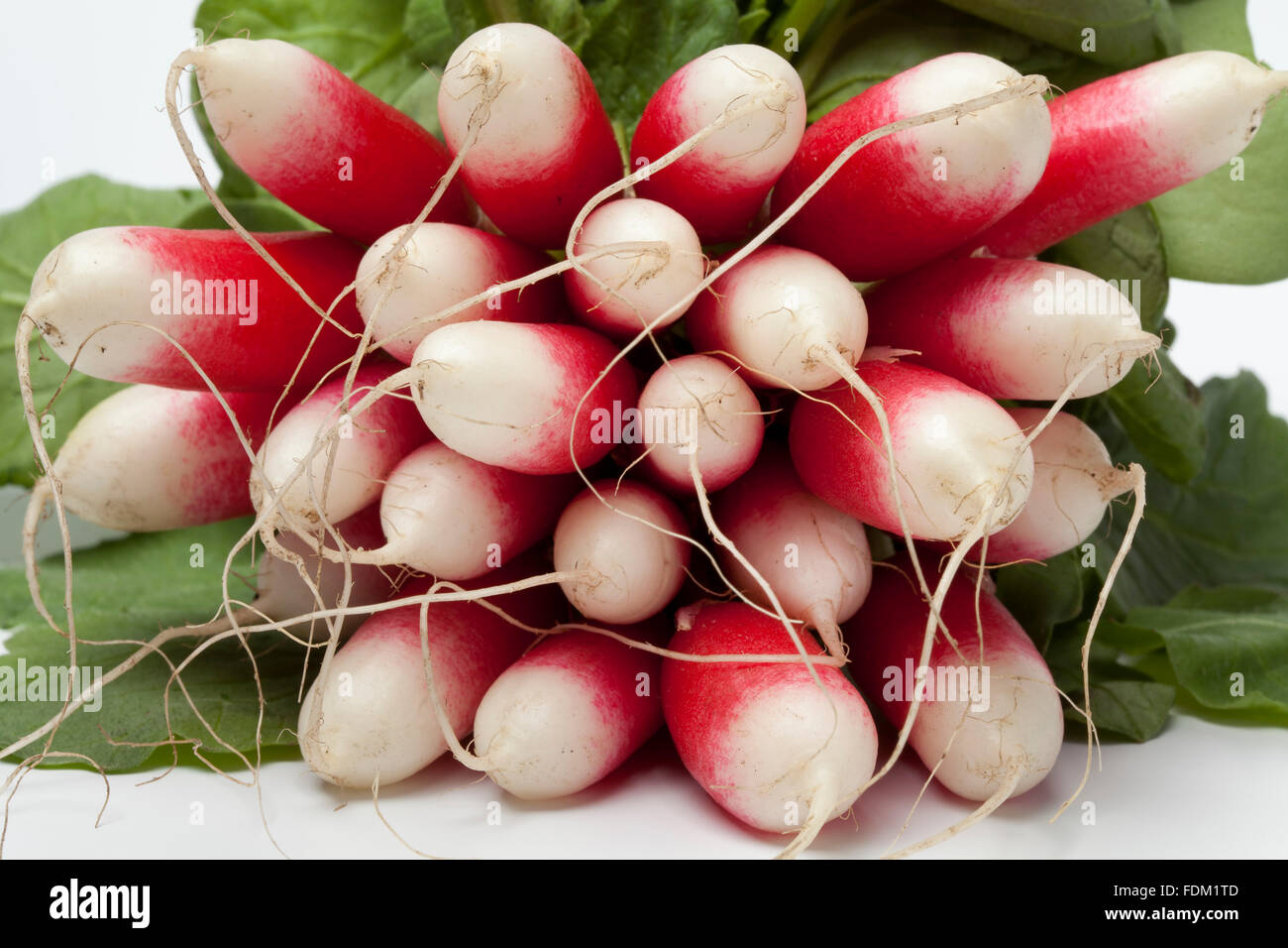 Fresh oval red and white Radish on white background - Stock Image