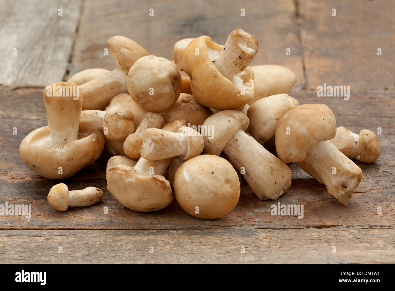 Heap of fresh St.George's mushrooms on a table - Stock Image