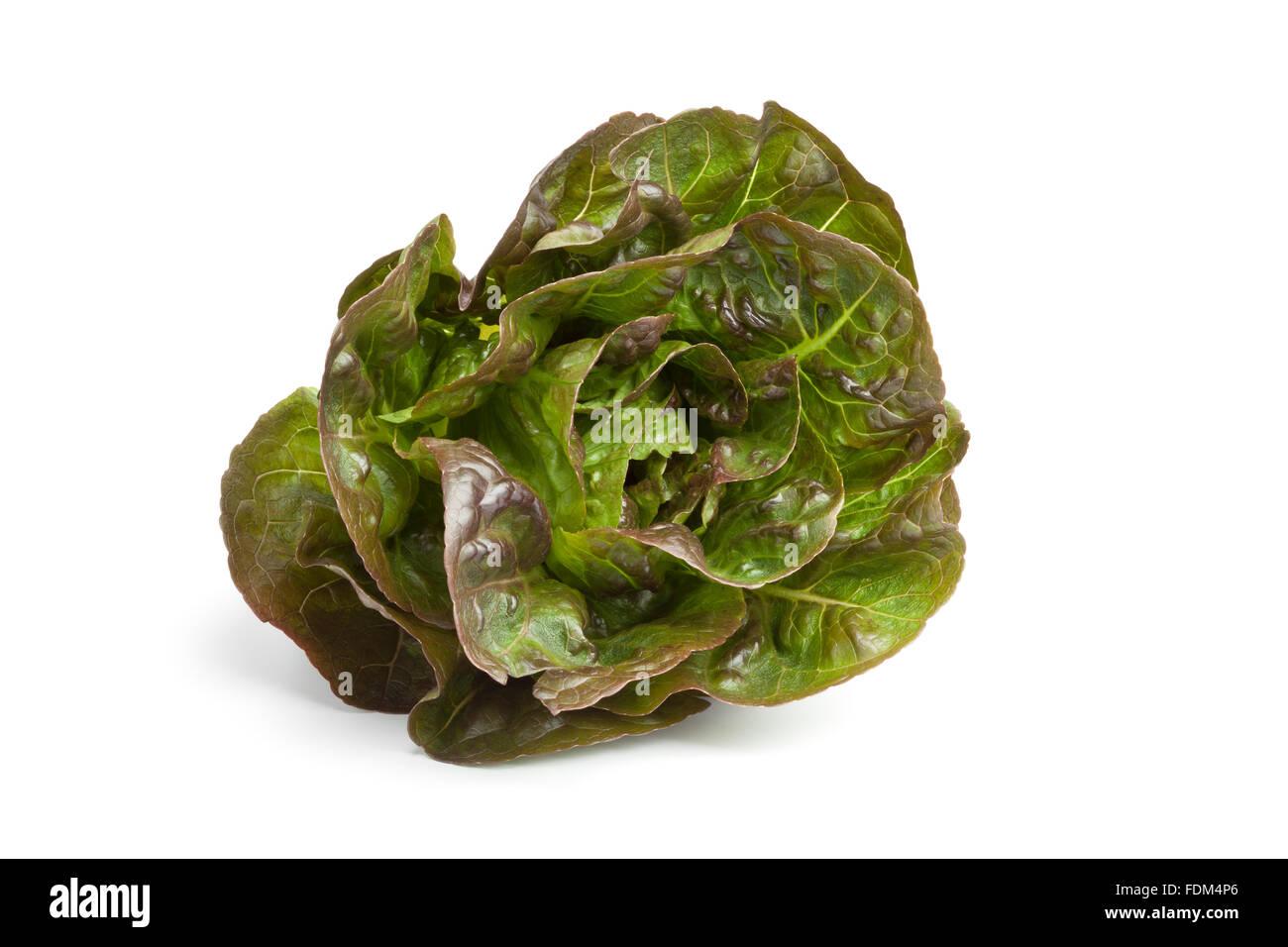 Little fresh Gem lettuce on white background - Stock Image