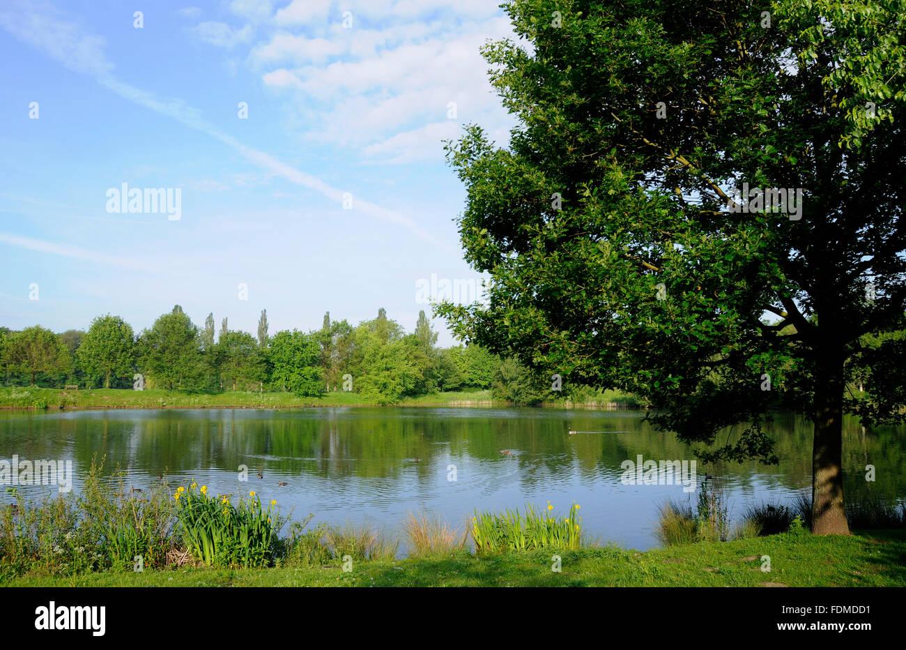 landscape,tecklenburger country - Stock Image