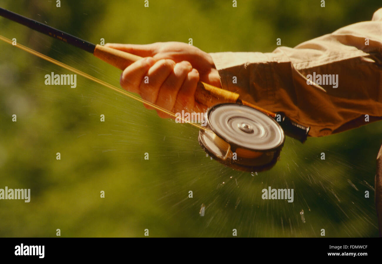 Drops of water spin from a fly fishing reel as line is stripped out - Stock Image