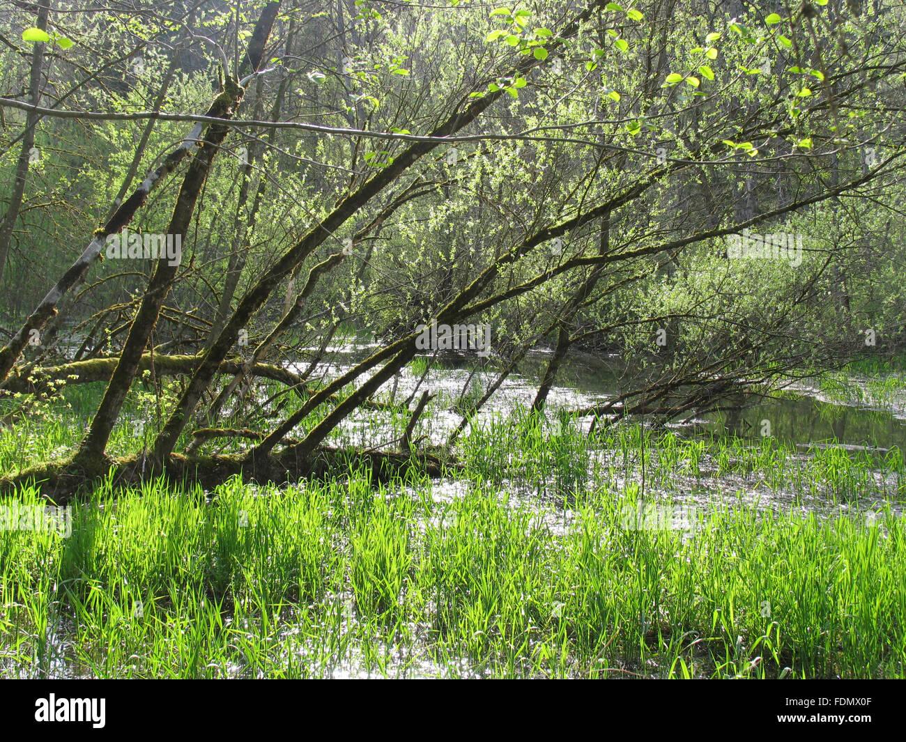 floodplain,au pupplinger - Stock Image