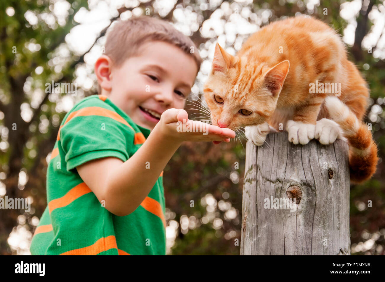 boy feeding cat with hand - Stock Image