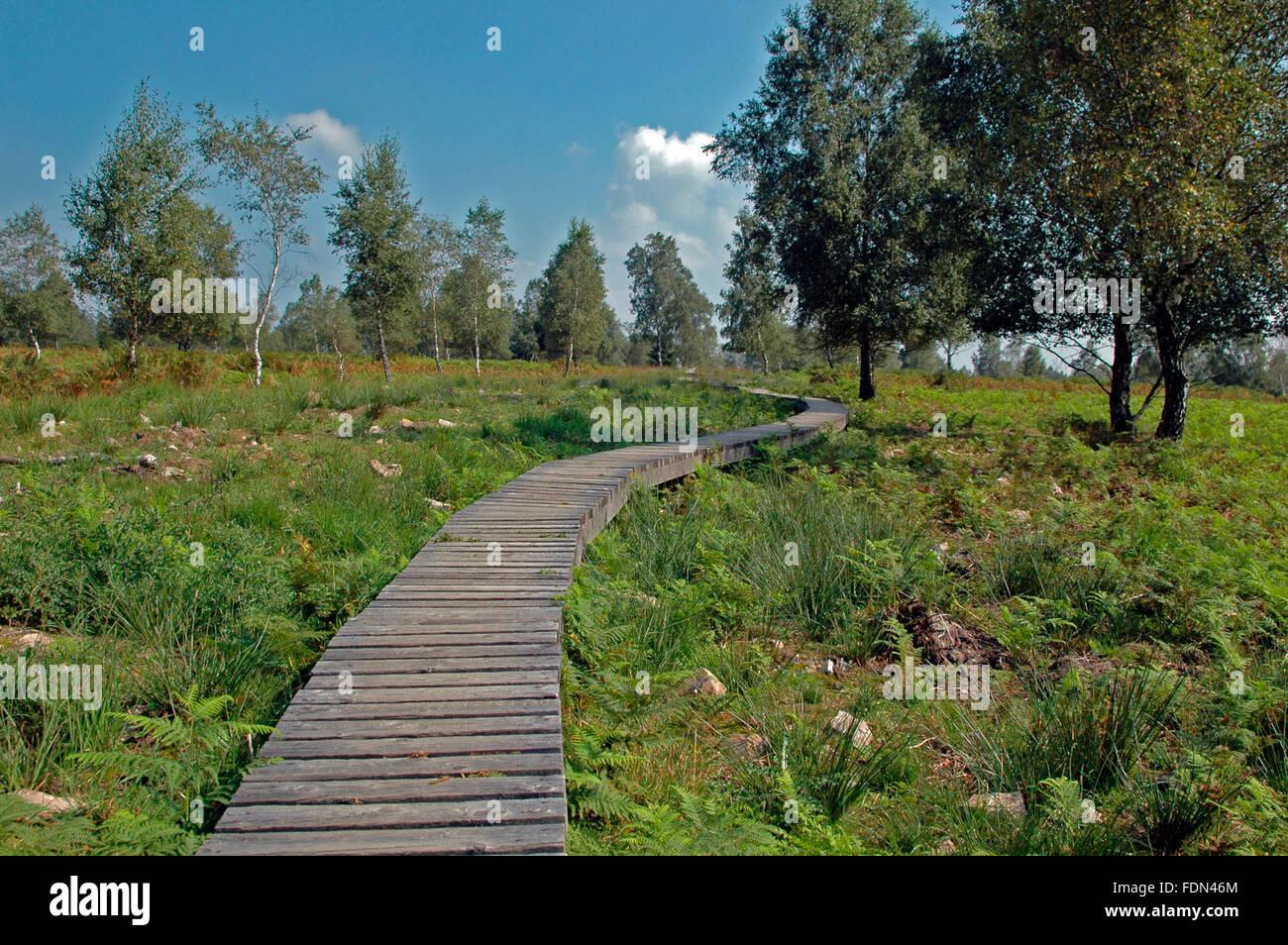 nature,high morr,north eifel - Stock Image