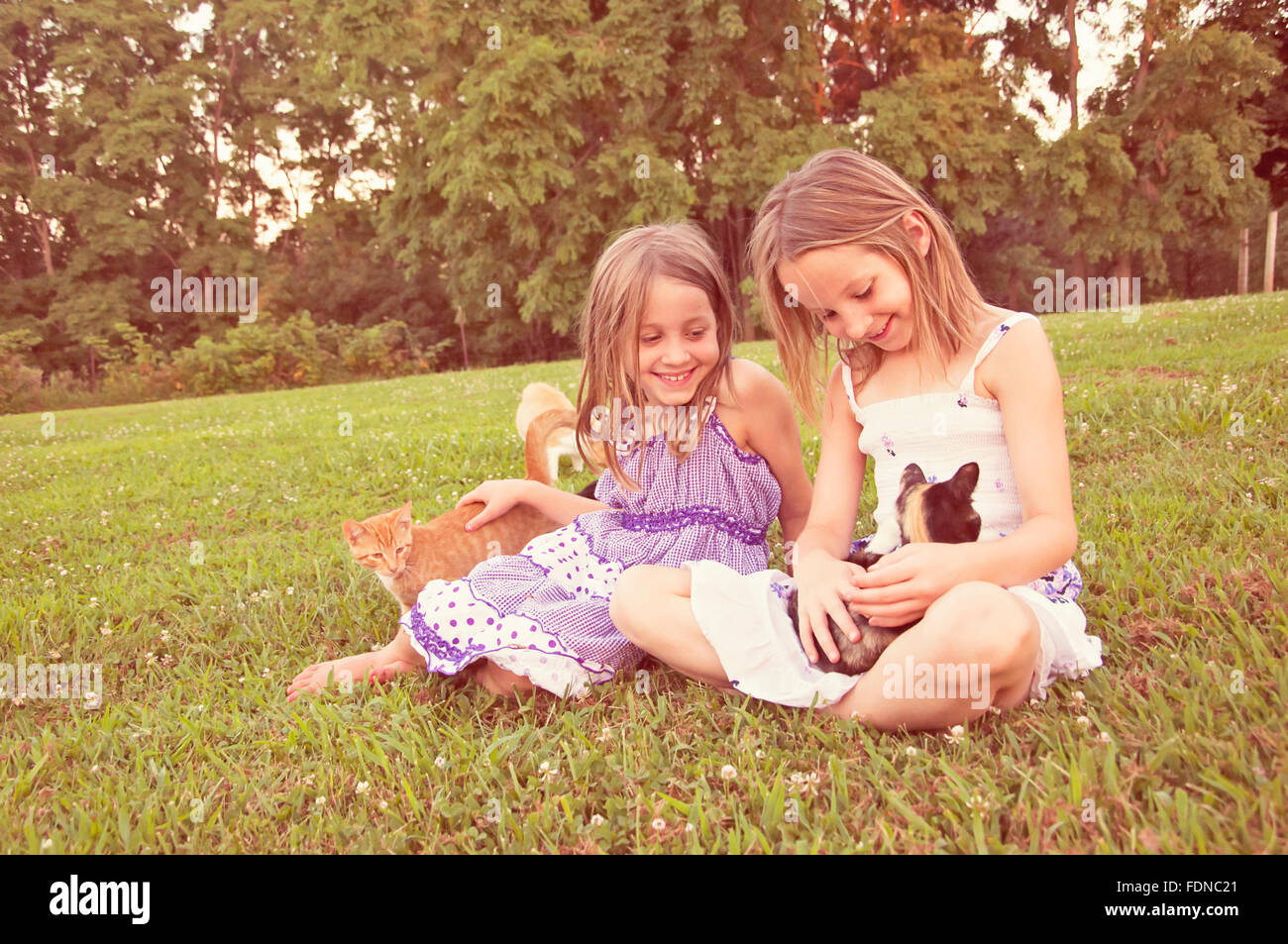 Two little girls with sundresses petting and holding kittens - Stock Image
