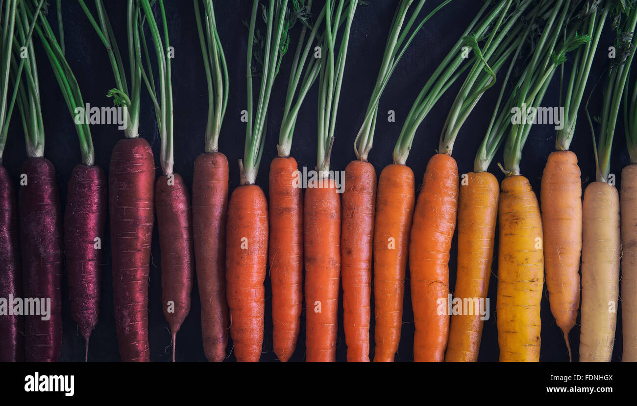 Multi coloured carrots - Stock Image