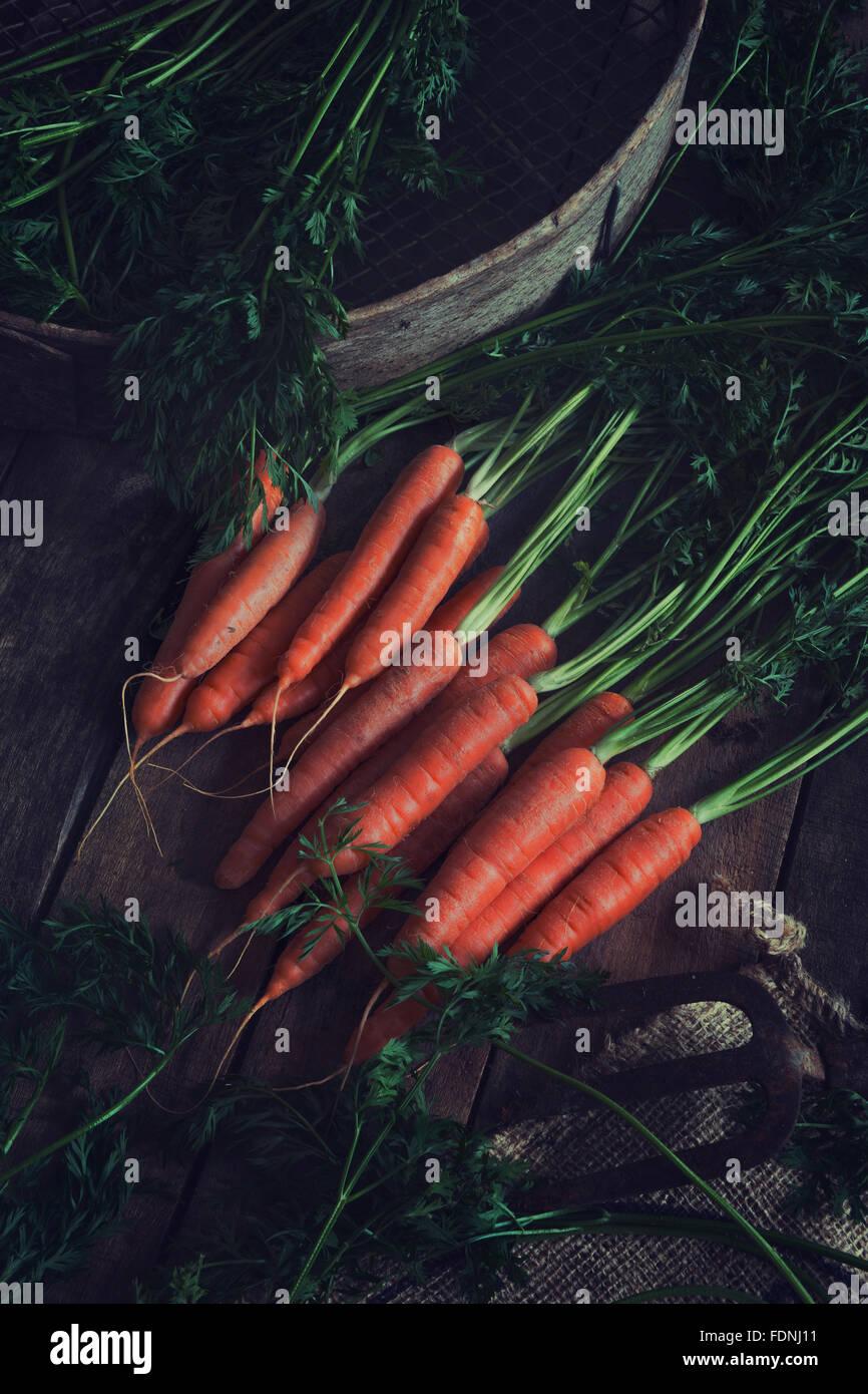 Some beautiful freshly picked organic carrots Stock Photo