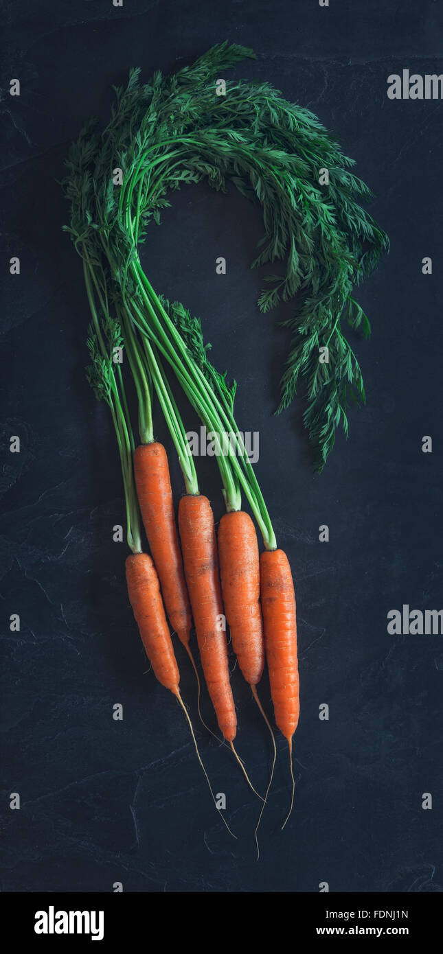 Some beautiful freshly picked organic carrots - Stock Image