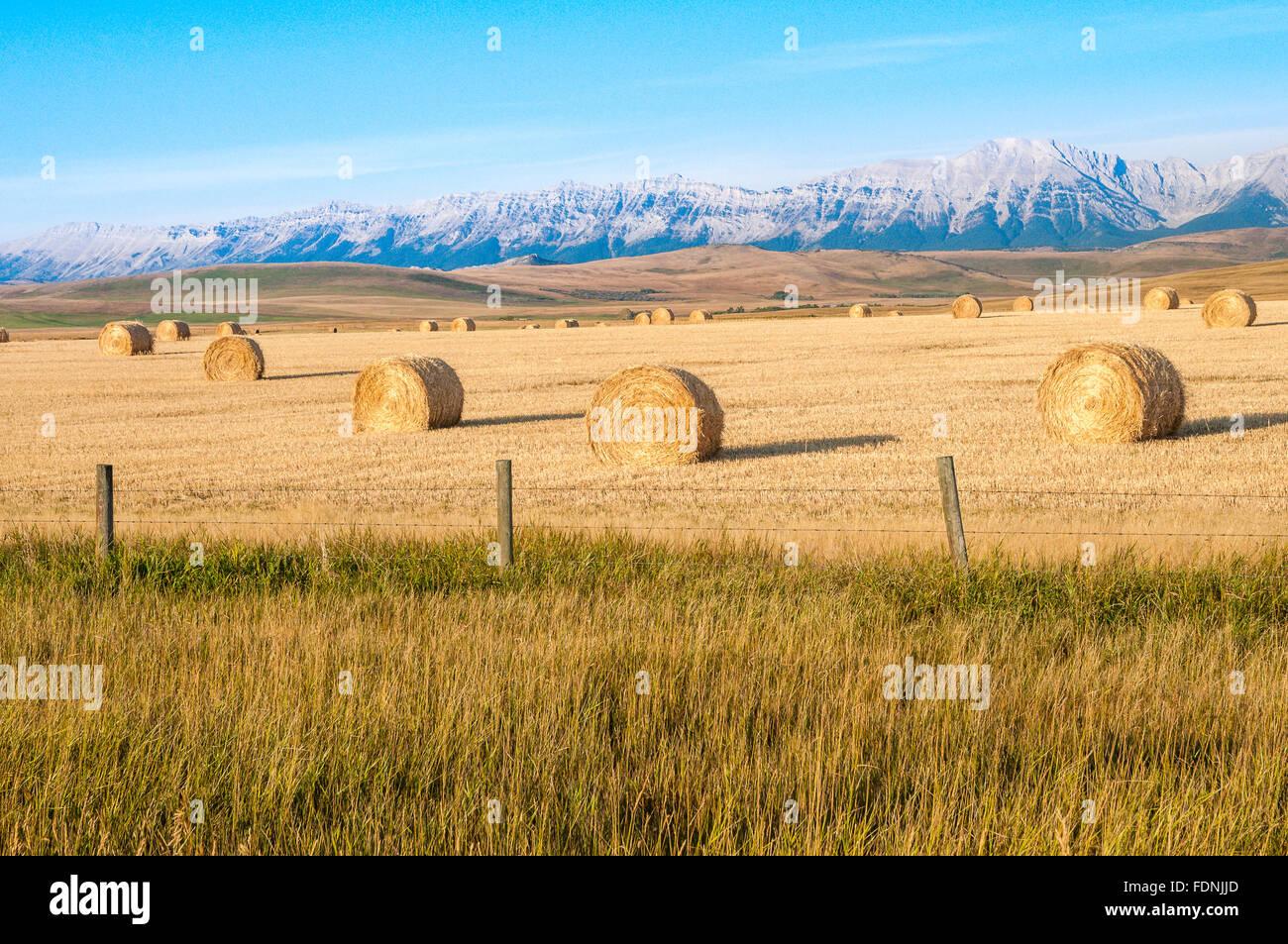Hay bales at Maycroft, Alberta, Canada - Stock Image