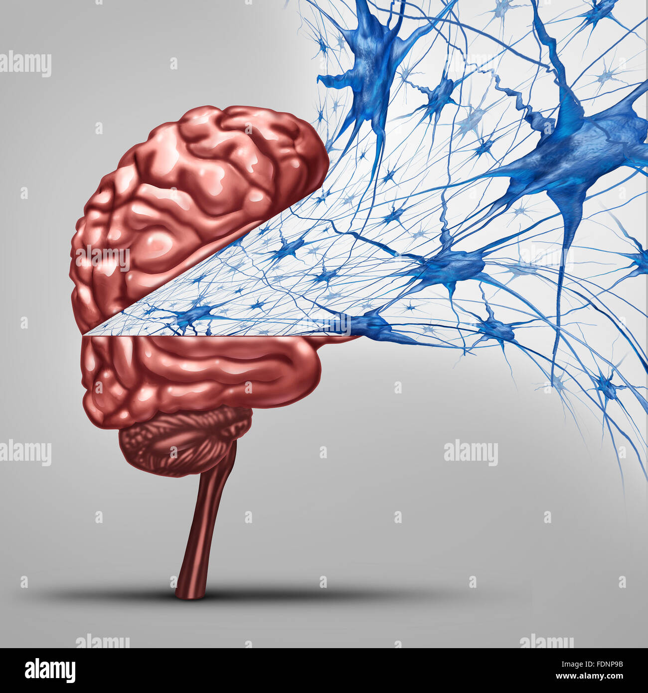 Brain neurons concept and human intelligence medical symbol represented by an open thinking organ with active neuron - Stock Image
