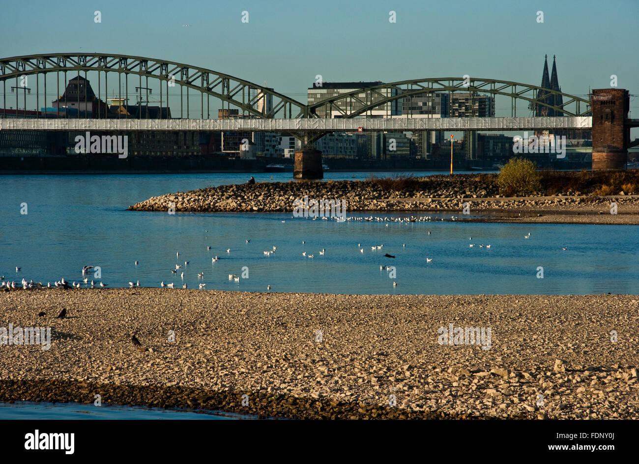 cologne,rhine river,hohenzollern bridge,sandbar - Stock Image