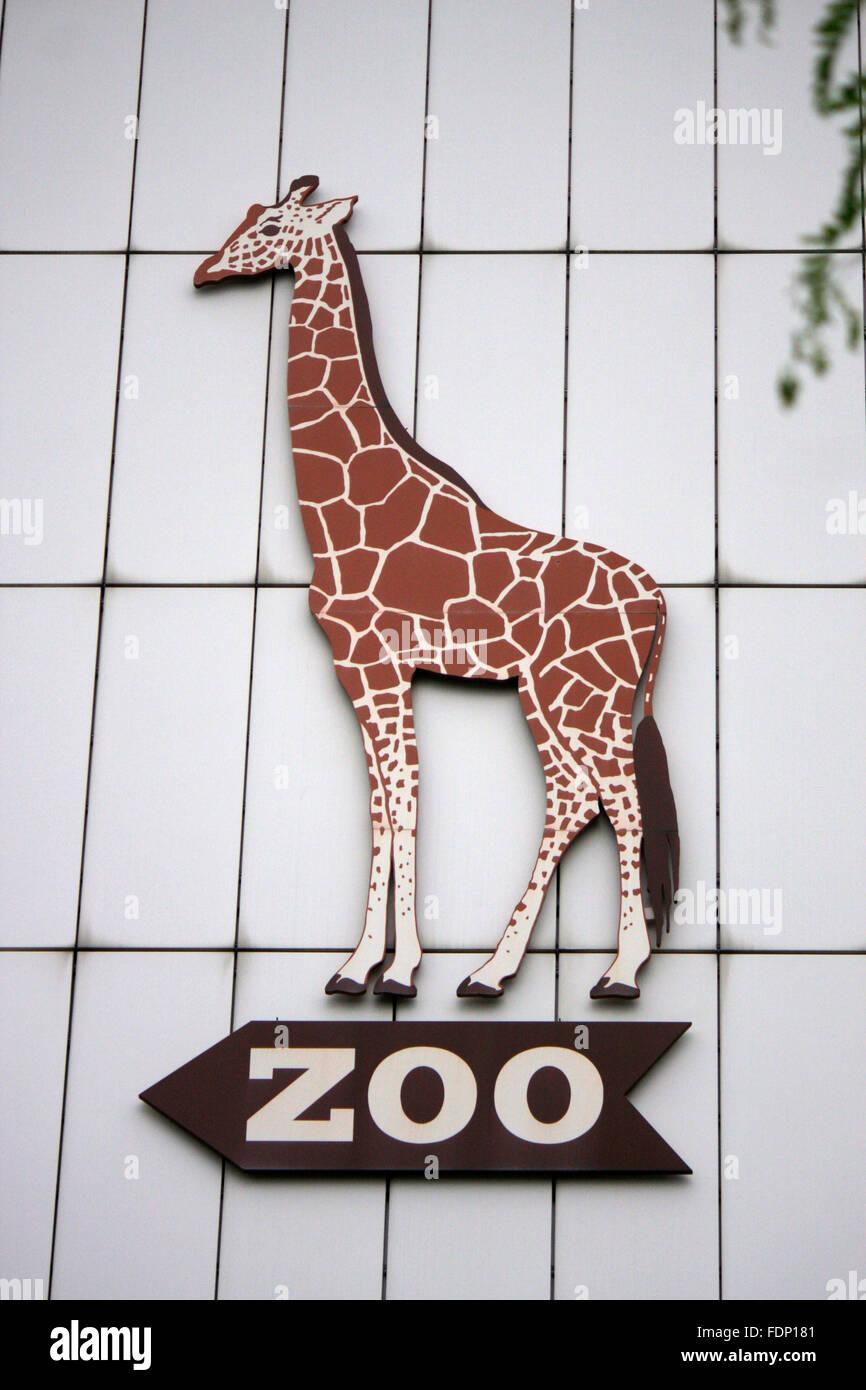 Giraffen Bild, Zoo, Berlin-Charlottenburg. - Stock Image
