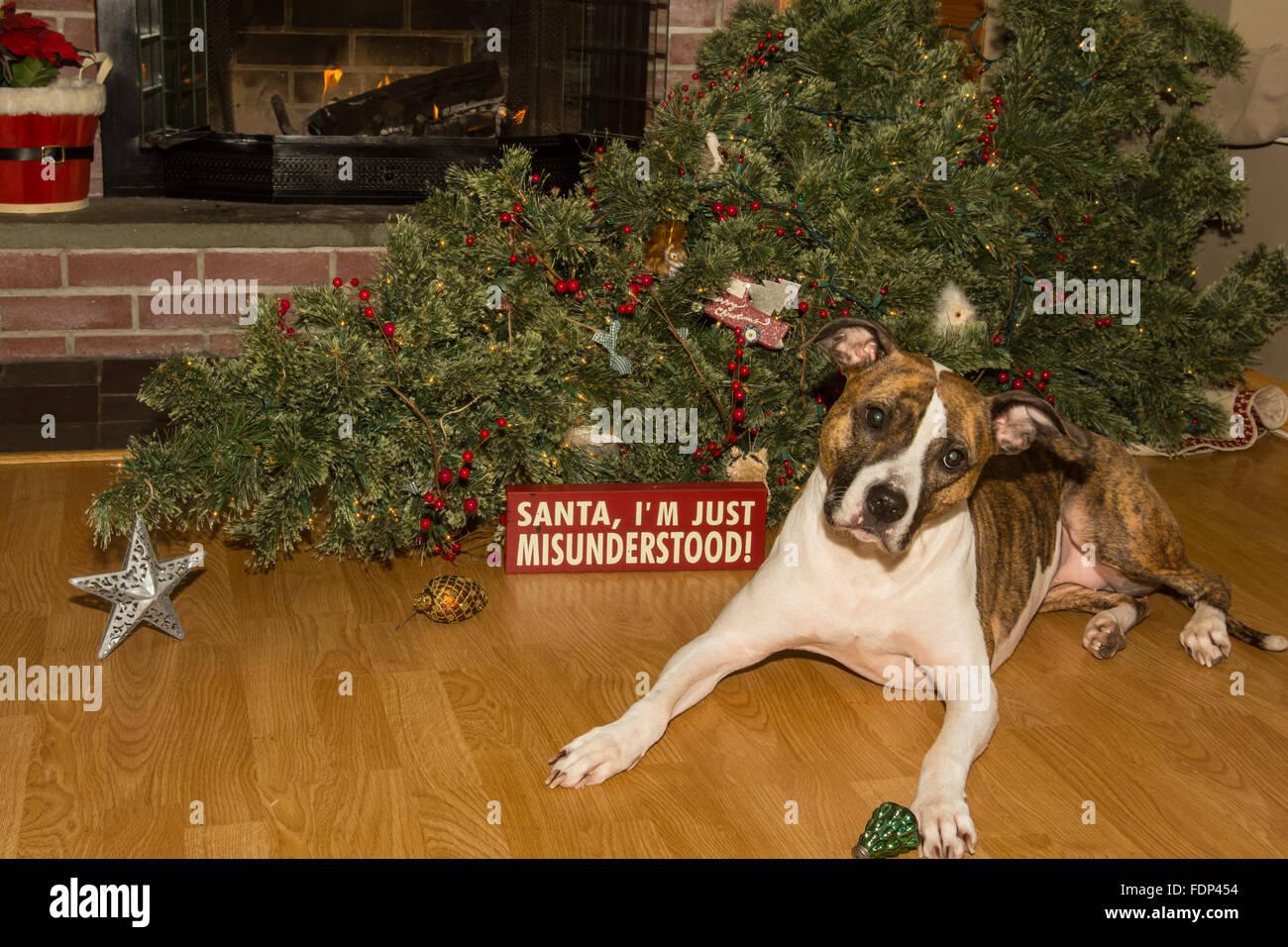 ashamed dog stock photos amp ashamed dog stock images alamy