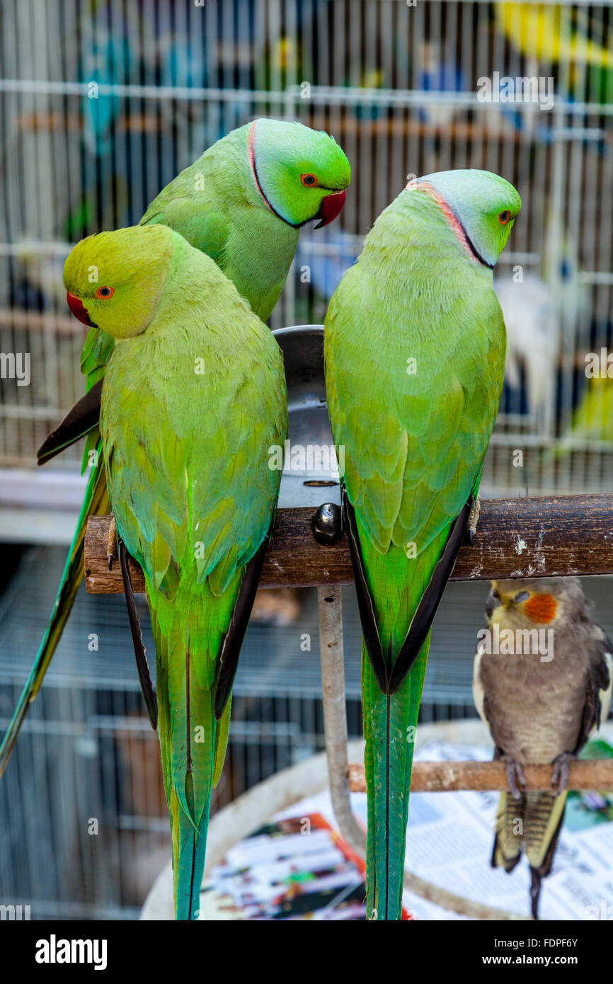 Exotic Birds For Sale >> Colourful Exotic Birds For Sale At The Bird Market In Souk Waqif