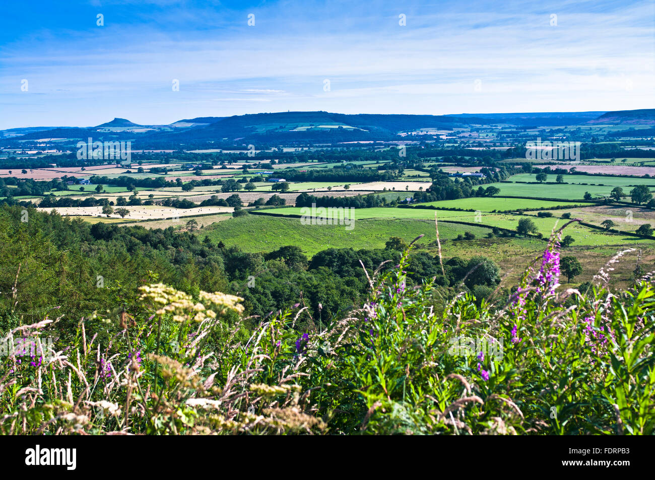 Summer view from Clay Bank across farmland in the vale to Roseberry Topping and the Cleveland Hills, North York - Stock Image