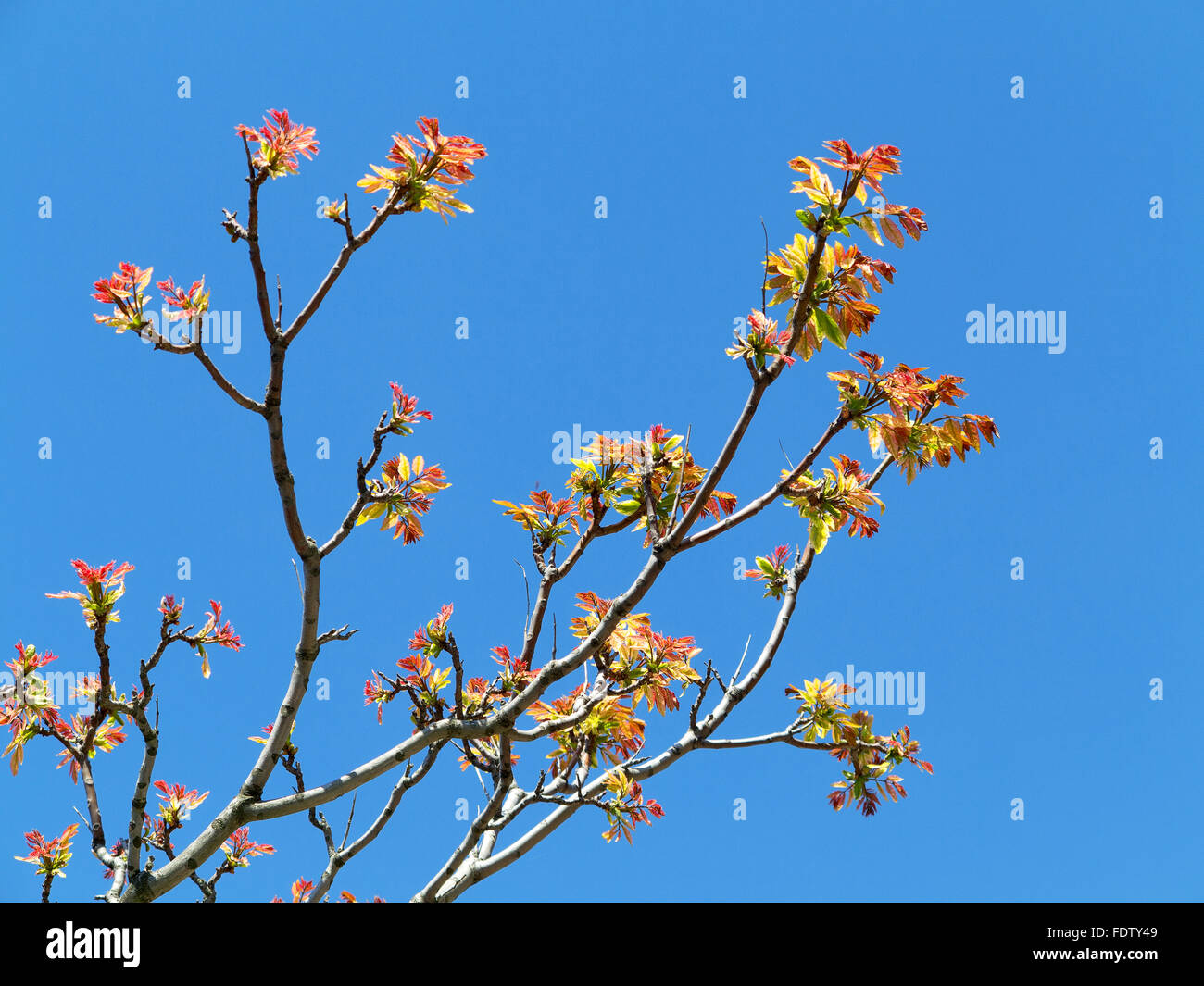 Authentic landscape branch with leaves against the sky, backlight, as a background for the formulation of advertising - Stock Image