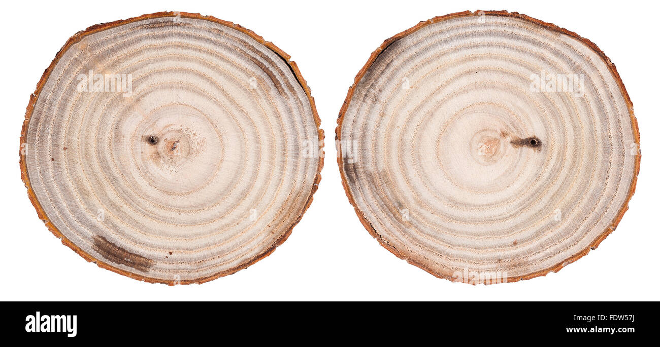 Round cut down tree with annual rings texture background Stock Photo