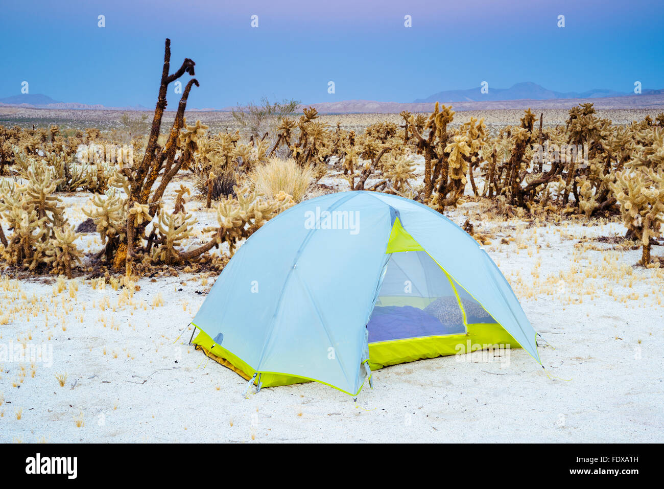 Tent camping at Mountain Springs Canyon Campground in Anza-Borrego Desert State Park, California - Stock Image