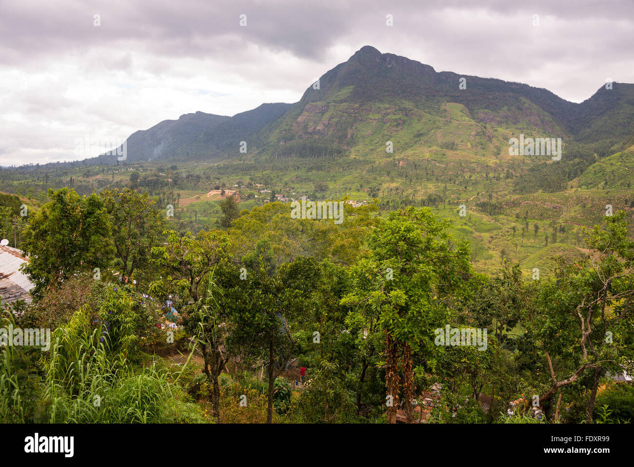 The Great Western Mountain peak near Talawakele in Central Province, Sri Lanka. Stock Photo