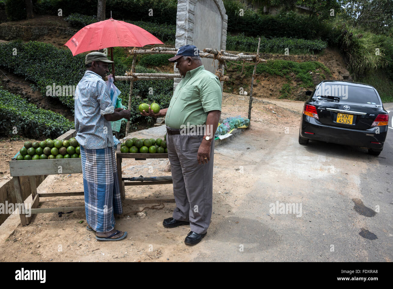 A Srli Lankan motorist stops to buy a bag of locally produced avocados at a roadside stall on the Hatton-Talawakele Stock Photo
