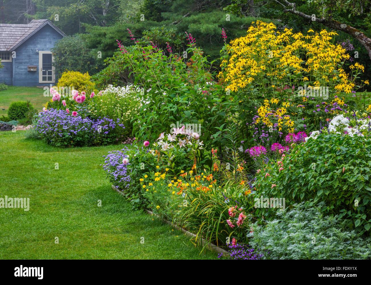 Northeast Harbor, Maine: Thuya Garden in summer. Featuring artemisia, lilies, rudbeckia, dahlias and salvia - Stock Image