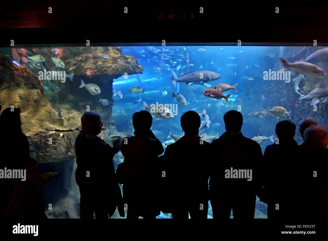 In the Aquarium of San Sebastian (Donostia), Basque Country, Spain. - Stock Image