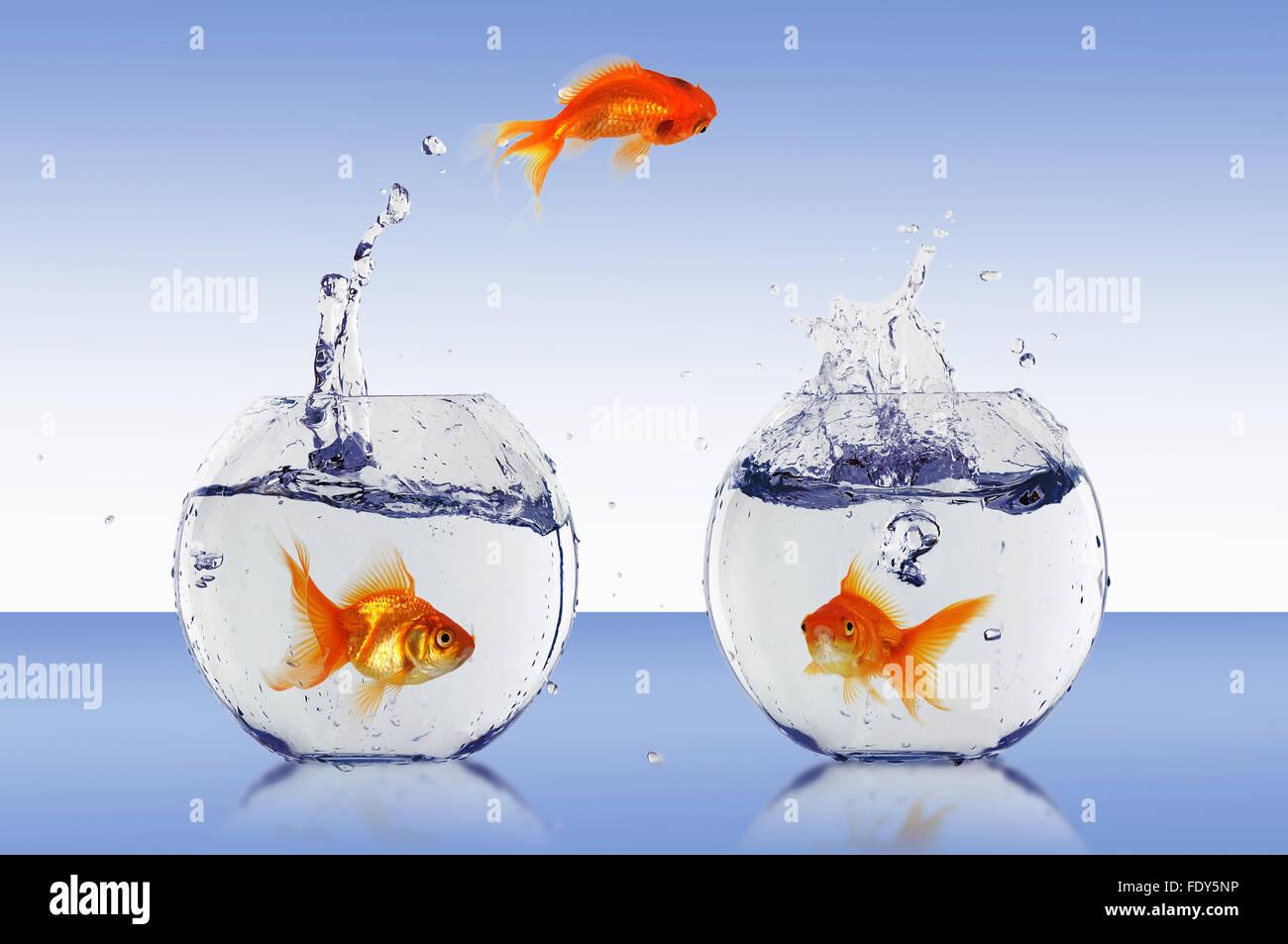 Goldfish Jump Into The Aquarium With Water Stock Photo 94639602 Alamy