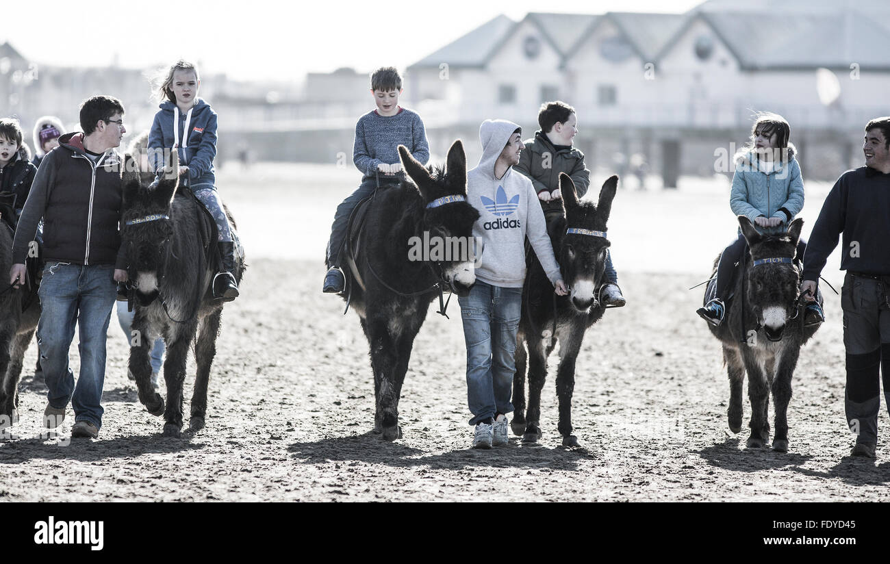 Donkeys on the Beach at Weston Super Mare, Somerset, UK - Stock Image