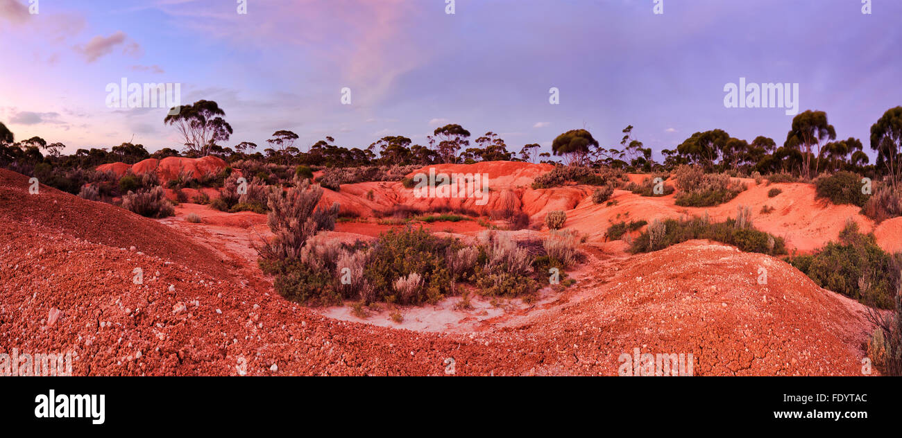 red soil of australian outback far away from civilisation in Western australia at sunset - Stock Image