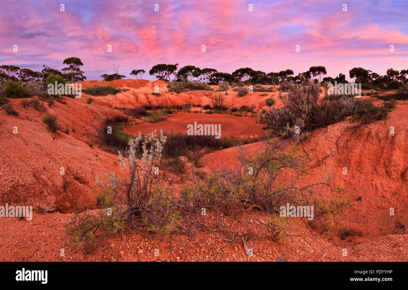 dried water hole in red soil of Australian outback between eucalyptus trees and bushes at sunset - Stock Image