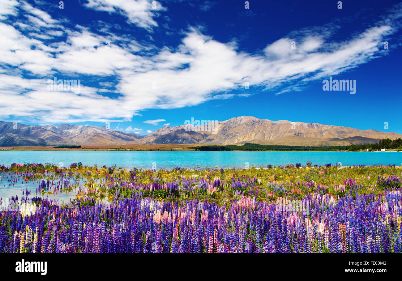 Mountain landscape with lake and flowers, New Zealand - Stock Image