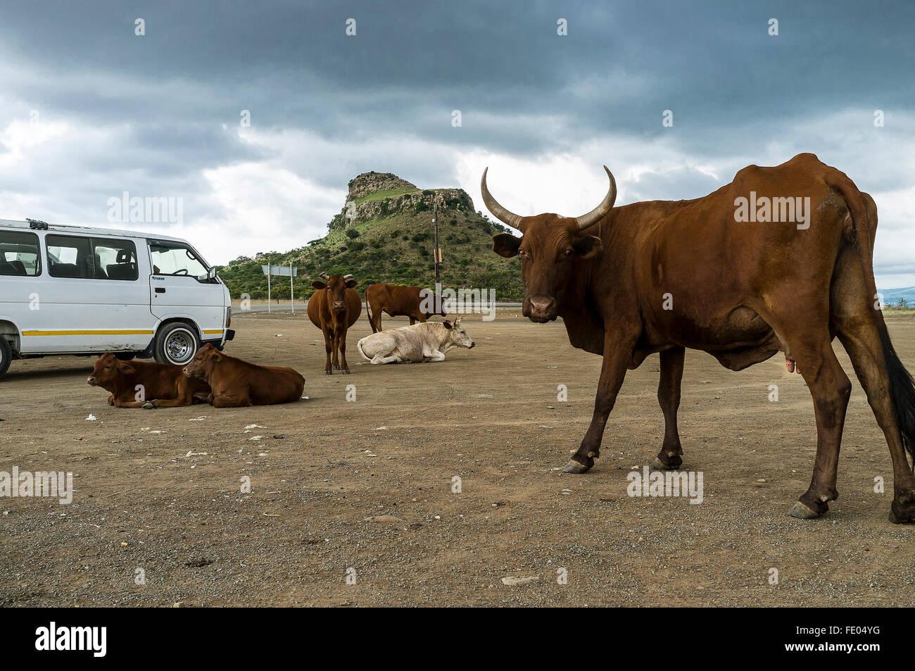 Kwa-zulu Natal, South Africa - Stock Image