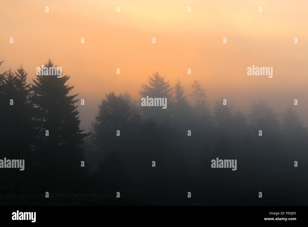 sunrise over trees, Wickannish, Vancouver island - Stock Image
