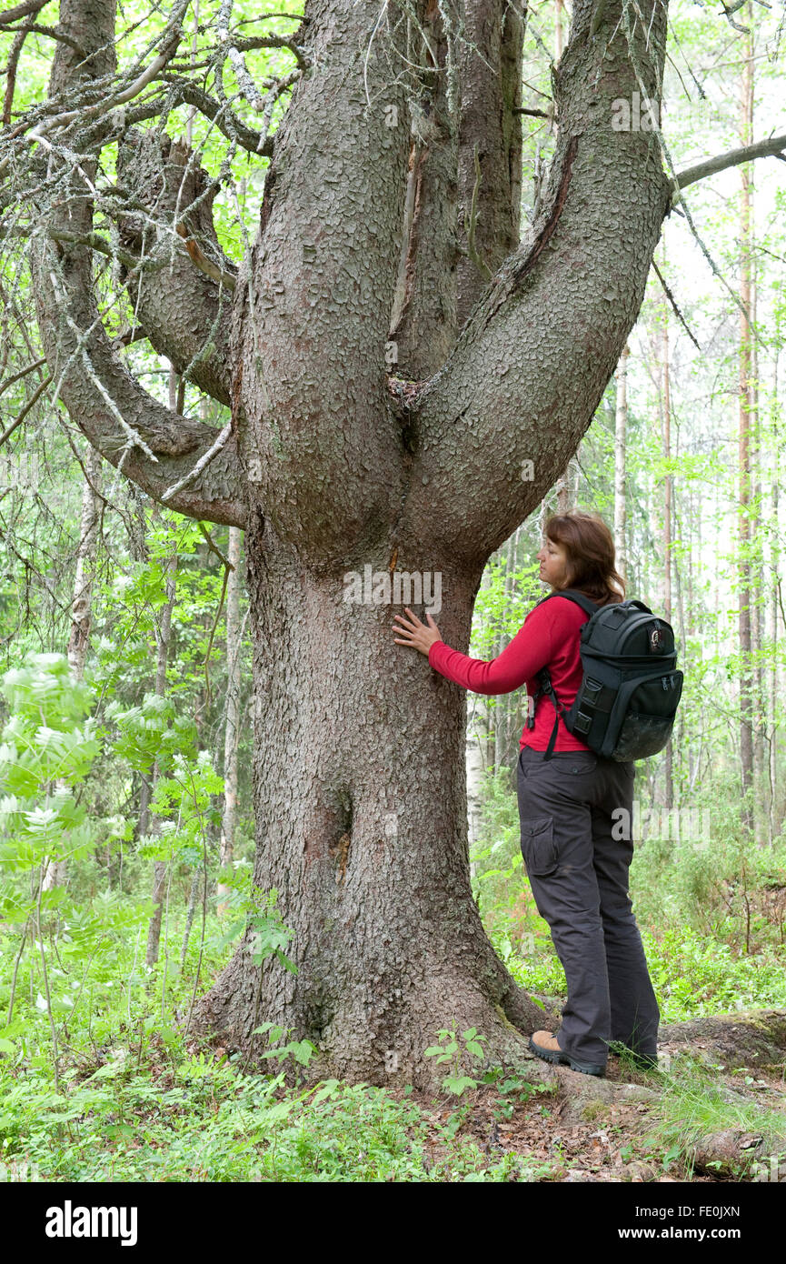 Woman standing by Old Pine Tree, Lentiira, Kuhmo, Finland - Stock Image