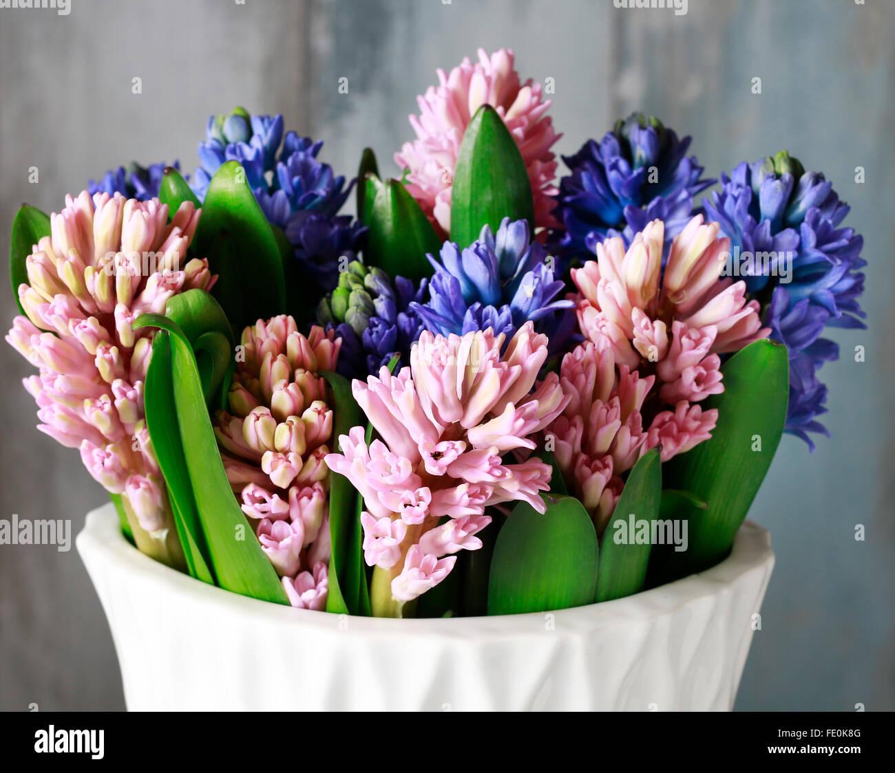 Hyacinth Bulb Flower Vase Stock Photos & Hyacinth Bulb Flower Vase ...
