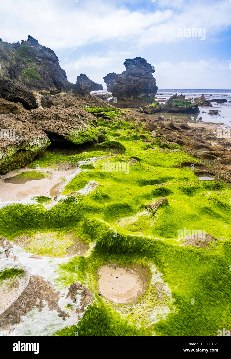 Lord Howe Island in the Tasman Sea, Unincorporated area of New South Wales, Australia. Algae covered rock at Middle - Stock Image
