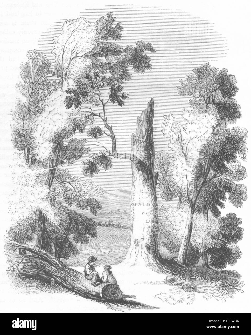 BERKS: Pope's Tree, at Binfield, Berks, antique print 1845 - Stock Image
